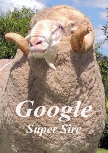 Google Super Sire